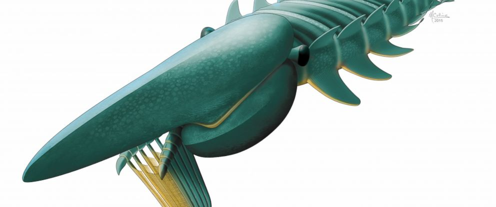 PHOTO: This artists rendering provided by Marianne Collins shows the filter-feeding anomalocaridid Aegirocassis benmoulae from the Early Ordovician (ca 480 million years old) of Morocco feeding on a plankton cloud.