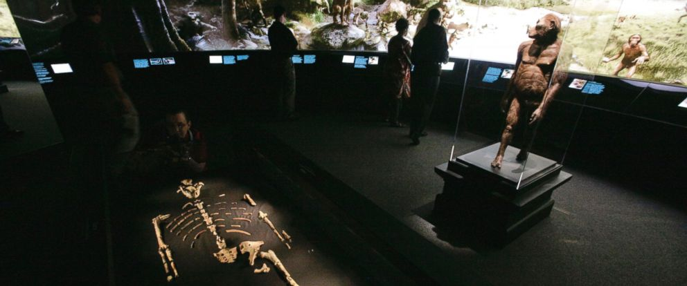 PHOTO: An exhibit featuring the 3.2 million year old Australopithecus afarensis skeleton called Lucy and an artists life-sized model, right, are displayed during a press preview at the Houston Museum of Natural Science in Houston, Aug. 28, 2007.