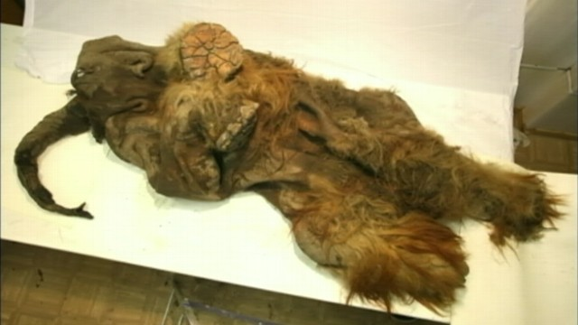 e0007b6257d buffering. Replay. Woolly Mammoth Discovered in Siberia
