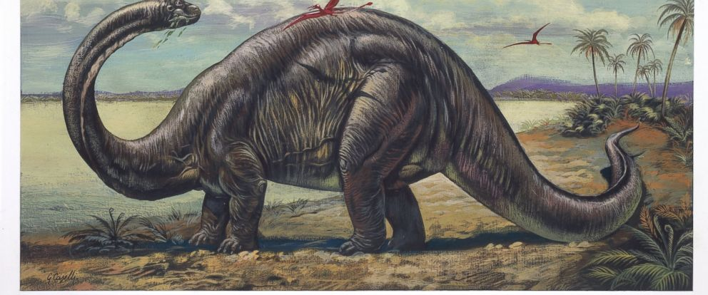 PHOTO: An apatosaurus is depicted in this undated illustration.