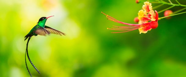 How the Clever Hummingbird Tortures Scientists - ABC News