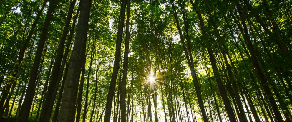 PHOTO: A forest is pictured in this stock photo.