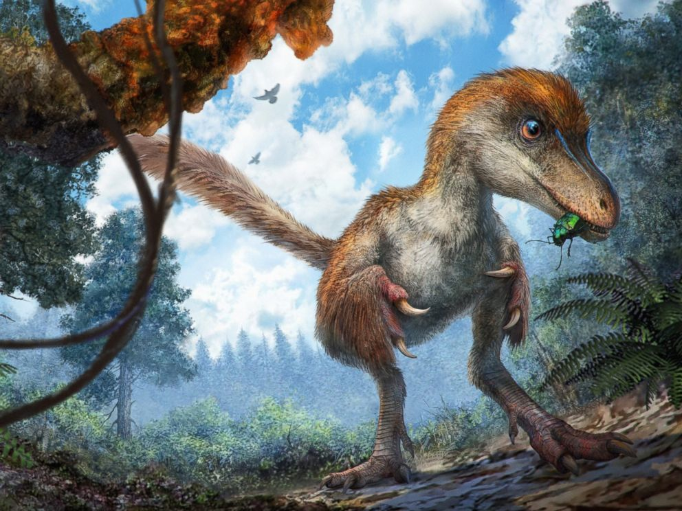 PHOTO: This reconstruction image shows a small coelurosaur approaching a resin-coated branch on the forest floor.