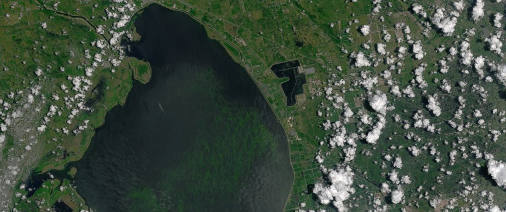 PHOTO: The blue-green algae bloom is visible in this image of Lake Okeechobee, acquired on July 2, 2016, by the Operational Land Imager (OLI) on the Landsat 8 satellite.