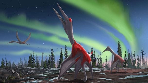 Newly discovered species of giant pterosaur may have had wingspan over 30 feet