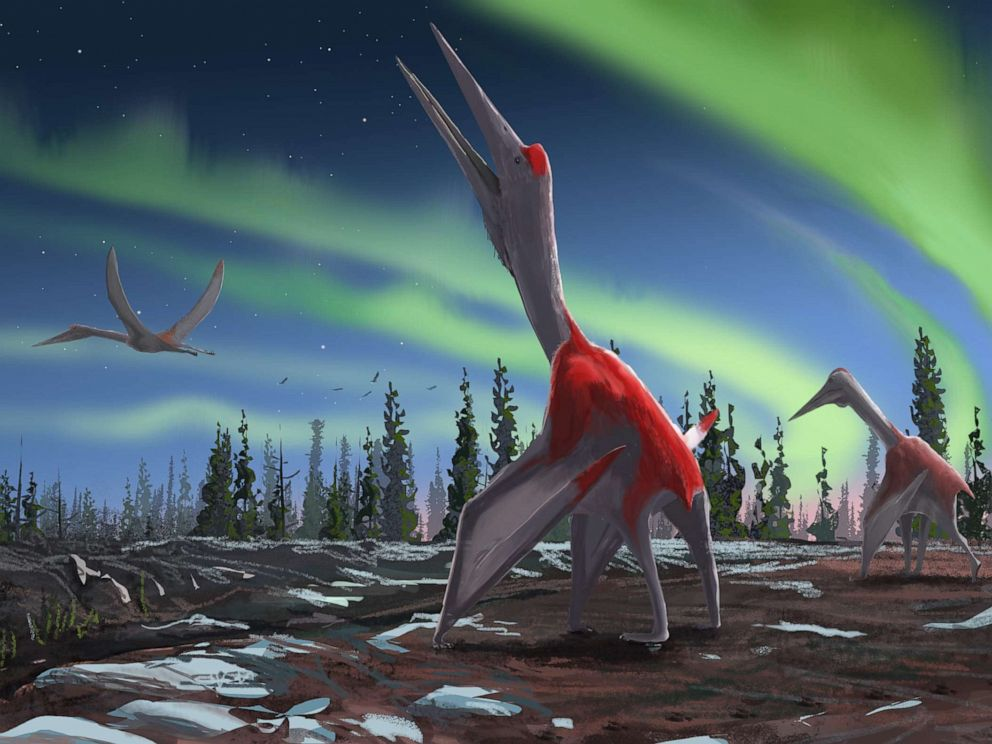 PHOTO: An illustration of what the recently discovered Cryodrakon could possibly look like.