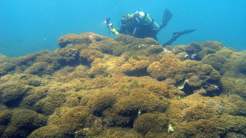Aggressive seaweed smothers considered one of world's most distant reefs thumbnail