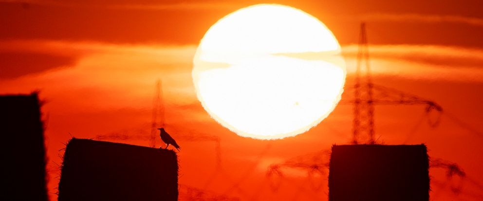 FILE - In this file photo dated Thursday, July 25, 2019, a bird sits on a straw bale on a field in Frankfurt, Germany, as the sun rises during an ongoing heatwave in Europe. The U.S. National Oceanic and Atmospheric Administration said Thursday Aug.