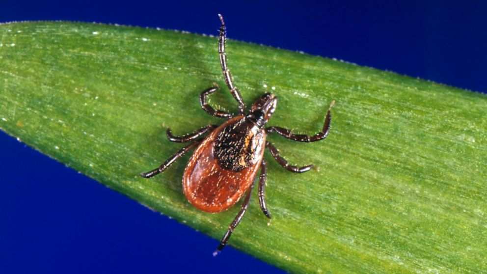 Tick, tick, tick: Alaska braces for invading parasites