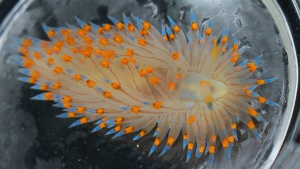 Species by the dozen moved north during marine heatwaves