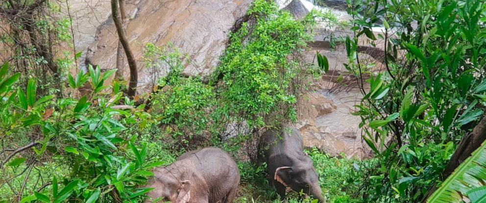 In this Oct. 5, 2019, photo released by the Department of National Parks, two elephants are seen stuck on the edge of the Haew Narok Waterfall in Khao Yai National Park, Nakhon Nayok, central Thailand. A herd of wild elephants was swept away by ragin