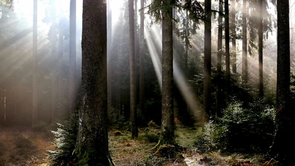 Damage to Germany's storied forests stokes climate debate