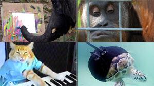 Stories of Amazing Animals