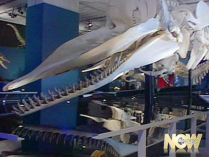 Whales of Tohora