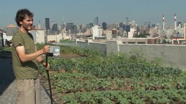 """VIDEO: """"Brooklyn Grange"""" in Queens, N.Y., is a 40,000-square-foot rooftop farm."""