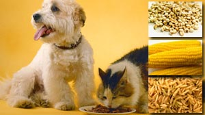 Photo: Vegetarian Diets for Pets