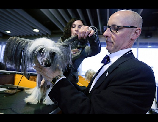2013 Westminster Dog Show Picture | Westminster Kennel Club Dog Show