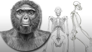 Photo: Before â??Lucy,â?? There Was â??Ardi:â?? First Major Analysis of One of Earliest Known Hominids