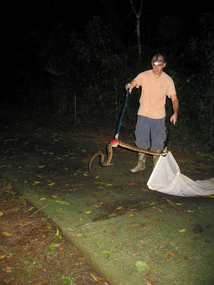 PHOTO: Dennis Wasko captures a fer-de-lance.