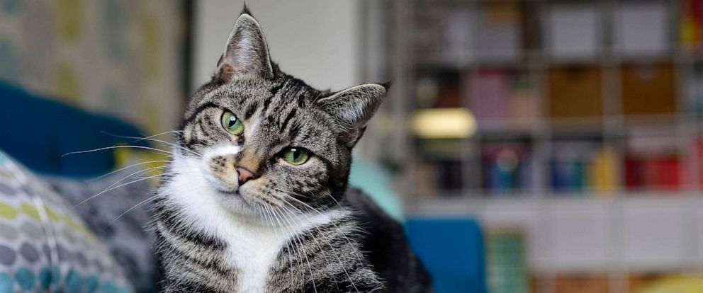 PHOTO: A cat is seen here in this stock photo.