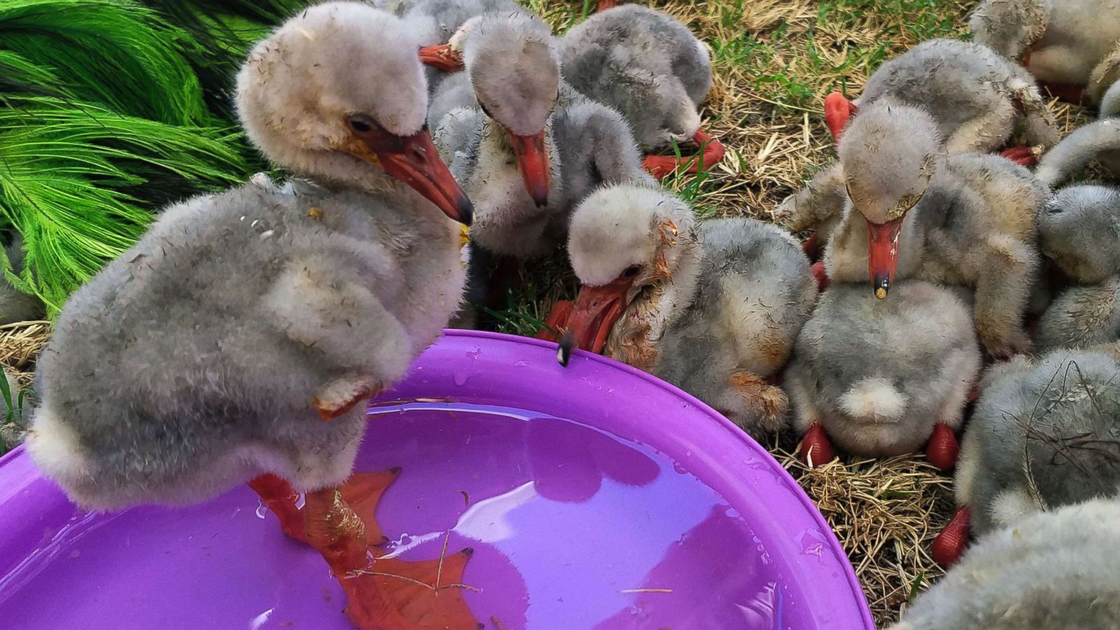 Image result for baby flamingos rescue