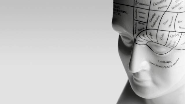PHOTO: Phrenology head