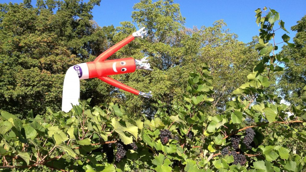 Inflatable Flailing Arm Tube Men Double As Scarecrows Abc News