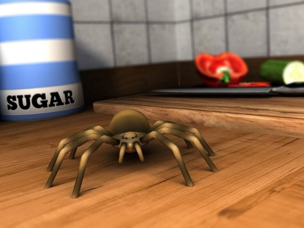 PHOTO: Soon youll be able to look at this high-fear spider without shaking.