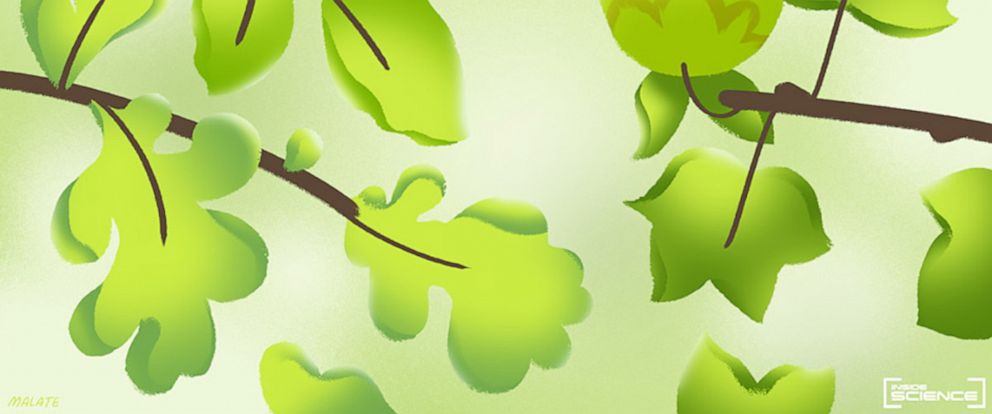 PHOTO: Illustration of lime-green spring foliage.