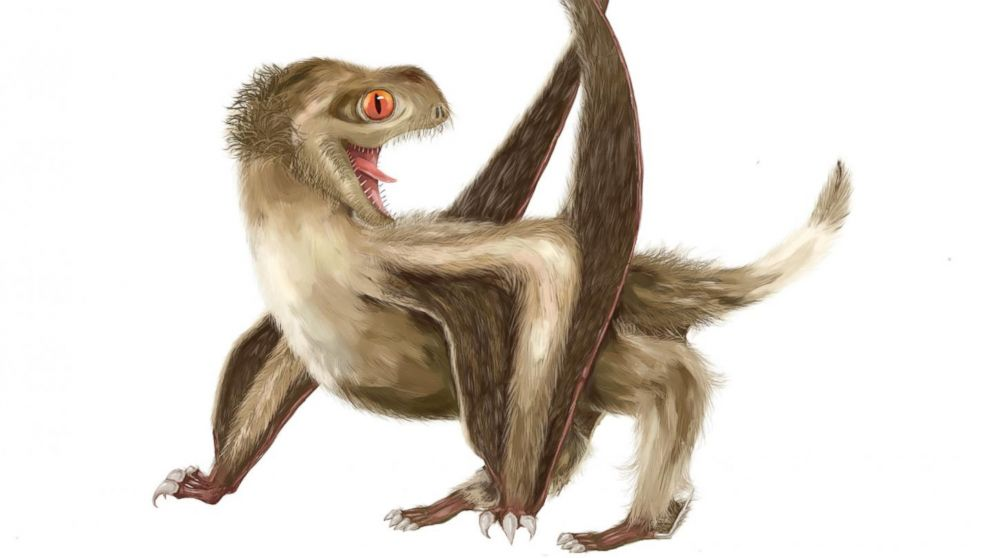 This is a reconstruction of the studied Daohugou pterosaur, with four different feather types over its head, neck, body, and wings, and a generally ginger-brown color.