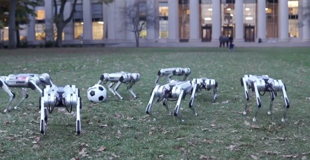 PHOTO: MITs mini cheetah robots are pictured here enjoying the fall.