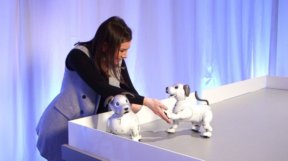 PHOTO: Sony unveiled Monday the new aibo autonomous entertainment robot dog.