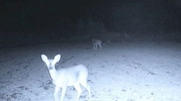 VIDEO: Eerie lights illuminate a group of deer in a wooded area in Mississippi.