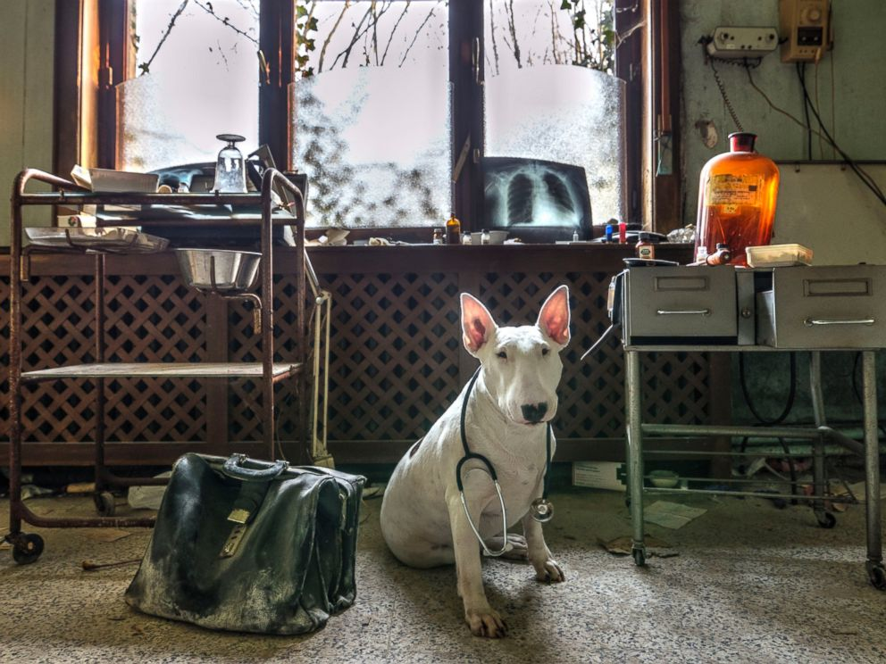 PHOTO: Claire the dog poses in an abandoned doctors house in Belgium.