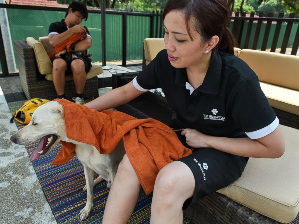 PHOTO: A staff member dries a dog after a swim in a bone-shaped pool at the Wagington luxury pet hotel in Singapore on Nov. 4, 2014.