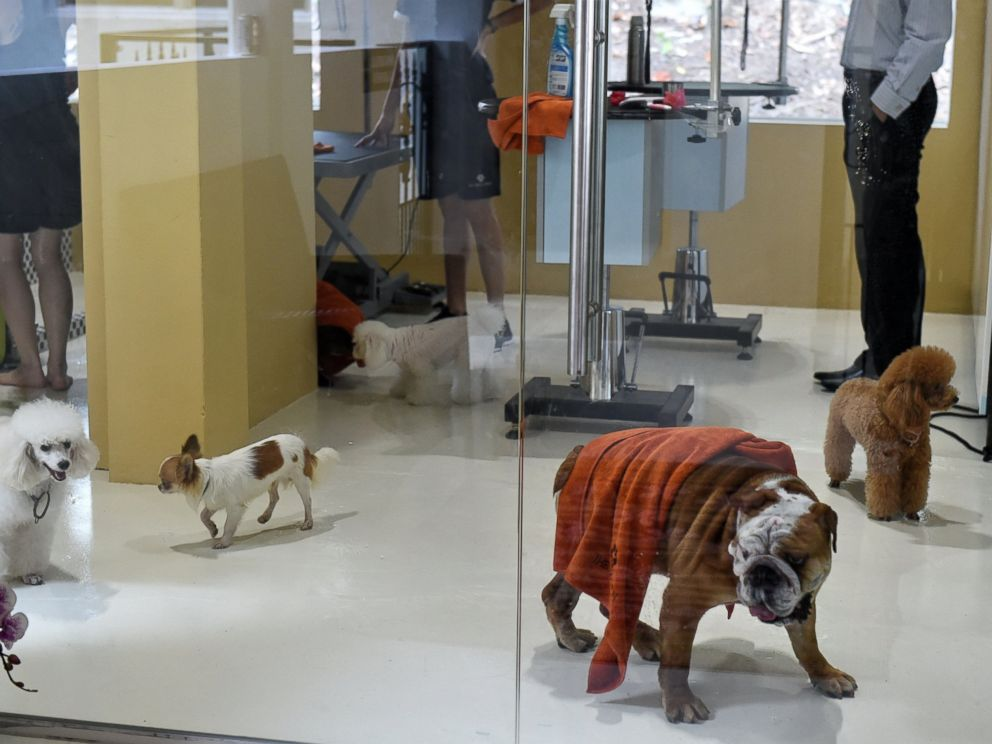 PHOTO: Dogs trot around in a spa and grooming room at the Wagington luxury pet hotel in Singapore on Nov. 4, 2014.