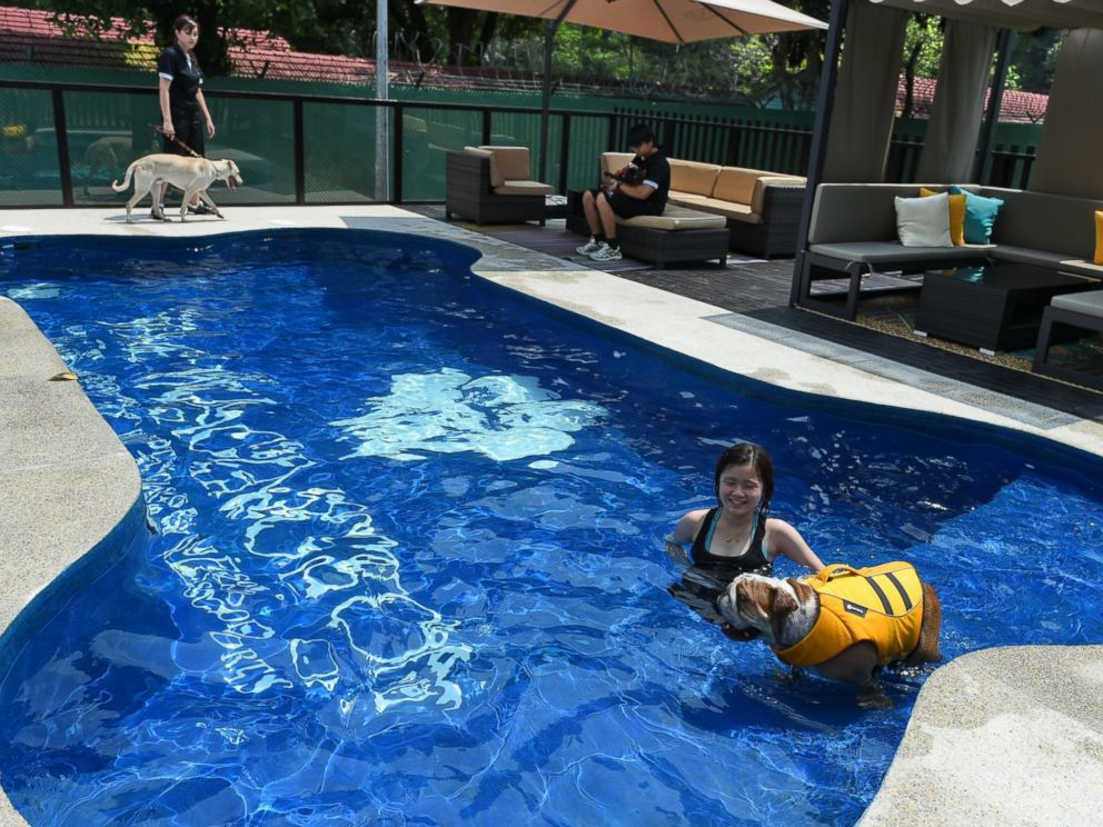 PHOTO: A staff member takes a dog for a swim in a bone-shaped pool at the Wagington luxury pet hotel in Singapore on Nov. 4, 2014.