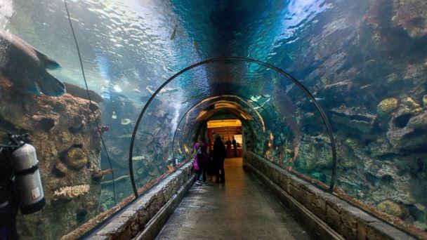 PHOTO: Awe-Inspiring Hotel Aquariums