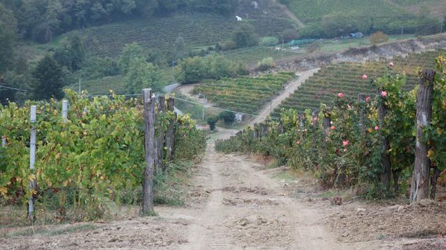 PHOTO: Marenco Winery, Strevi