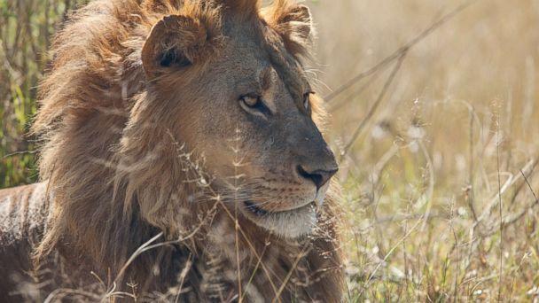Go on a Safari, Botswana