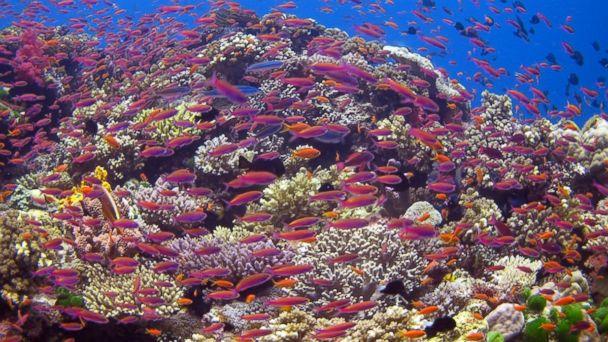 PHOTO: SCUBA Certification in Fiji.