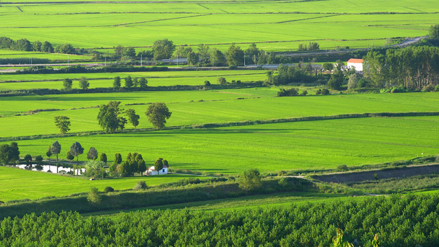 PHOTO:Rice fields, Vercelli
