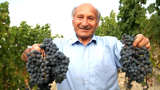 PHOTO: Vineyard worker, Monferrato District