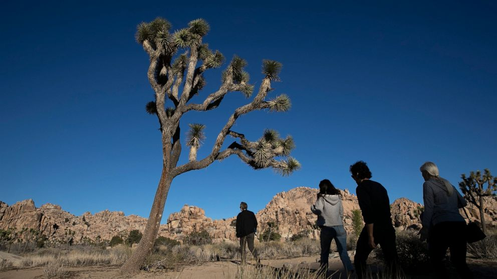 Joshua Tree National Park braces for crowds amid holidays