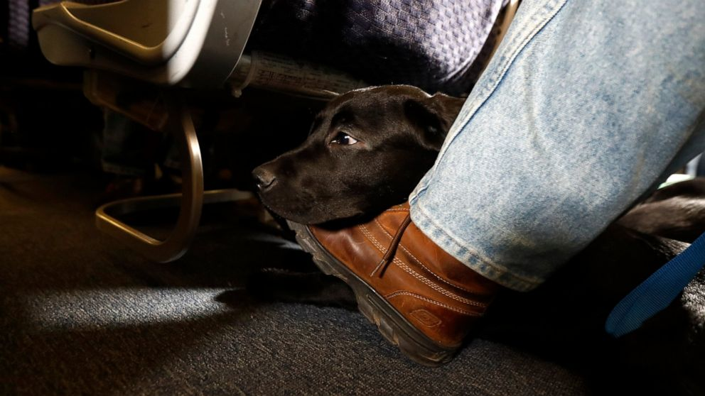 Image of article 'US tightens definition of service animals allowed on planes'