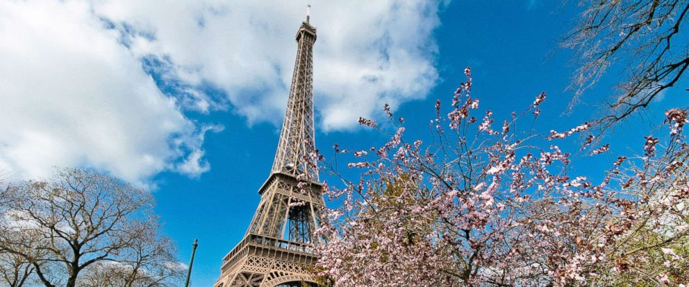 PHOTO: The Eiffel Tower from the Champs de Mars park in spring time with cherry blossom, in this undated stock photo, in Paris.