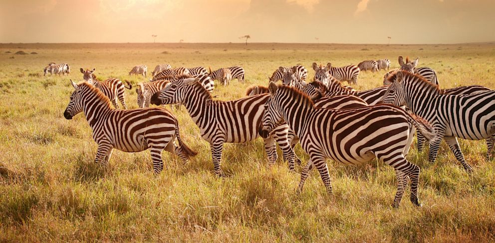 PHOTO: Bookings to Tanzania have nearly doubled over the last year, with travelers taking advantage of lower fares, according to CheapOair.com