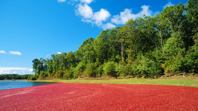 PHOTO: Named for the famous miles of Cape Cod, Massachusetts where cranberries are plentiful come fall, this is one of the most famous beach drinks in country.