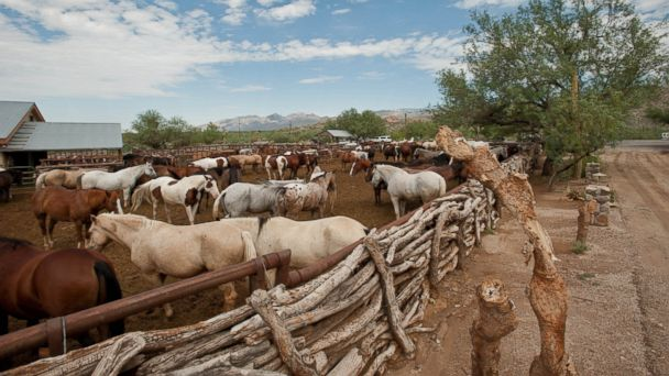 Tanque Verde Ranch in Tucson, Ariz.