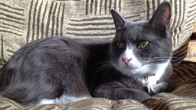 PHOTO: Alder is one of the resident cats at the Alderbrook Resort & Spa in the Hood Canal.
